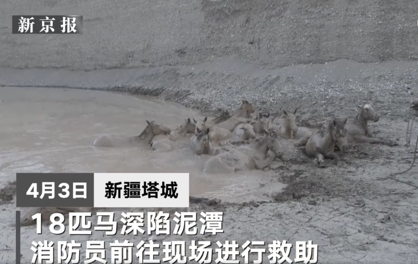 新疆18匹马饮水时深陷泥潭,消防员赶往救援!